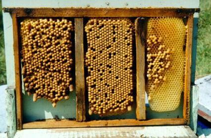 Sostenere le nostre api